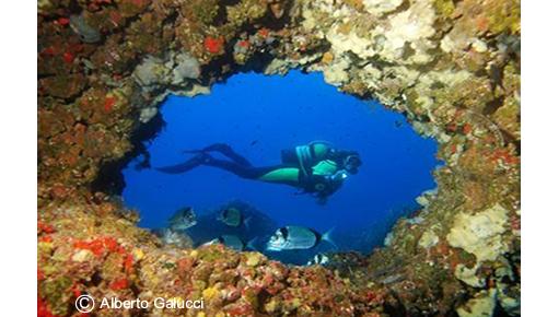 Ibiza, mejor destino de buceo de Europa, según la asociación PADI