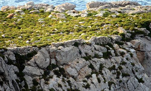 Illa Murada 2