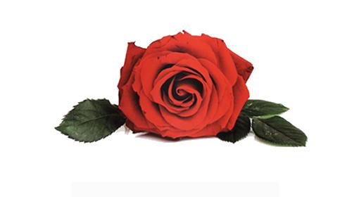 No te olvides de San Valentín