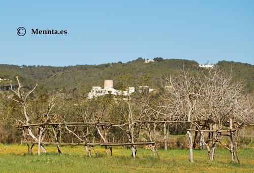 Rural-campo-Sant-Llorenç