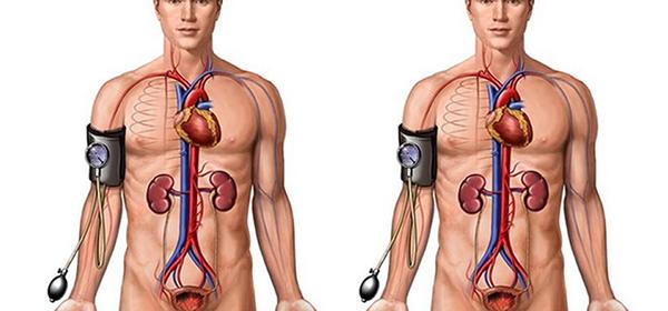 Problemas digestivos: hígado y vesícula