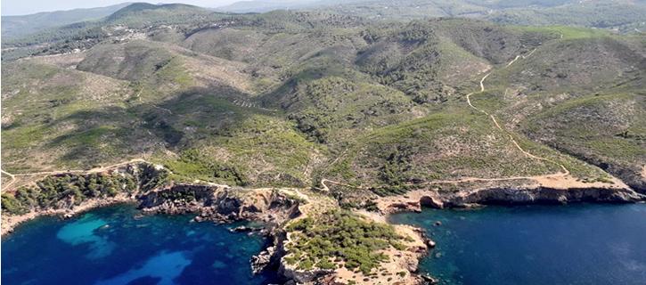 La complicada resurrección del bosque quemado en Ibiza